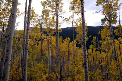 Aspen everywhere