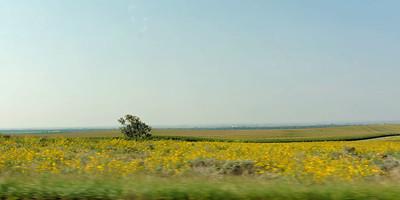 Driving - Colorado Corn Field