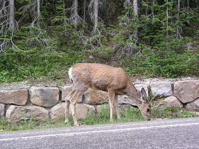 2003 Trip - Rocky Mountain National Park