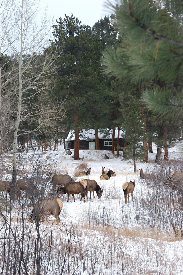 Elk RMNP 122008