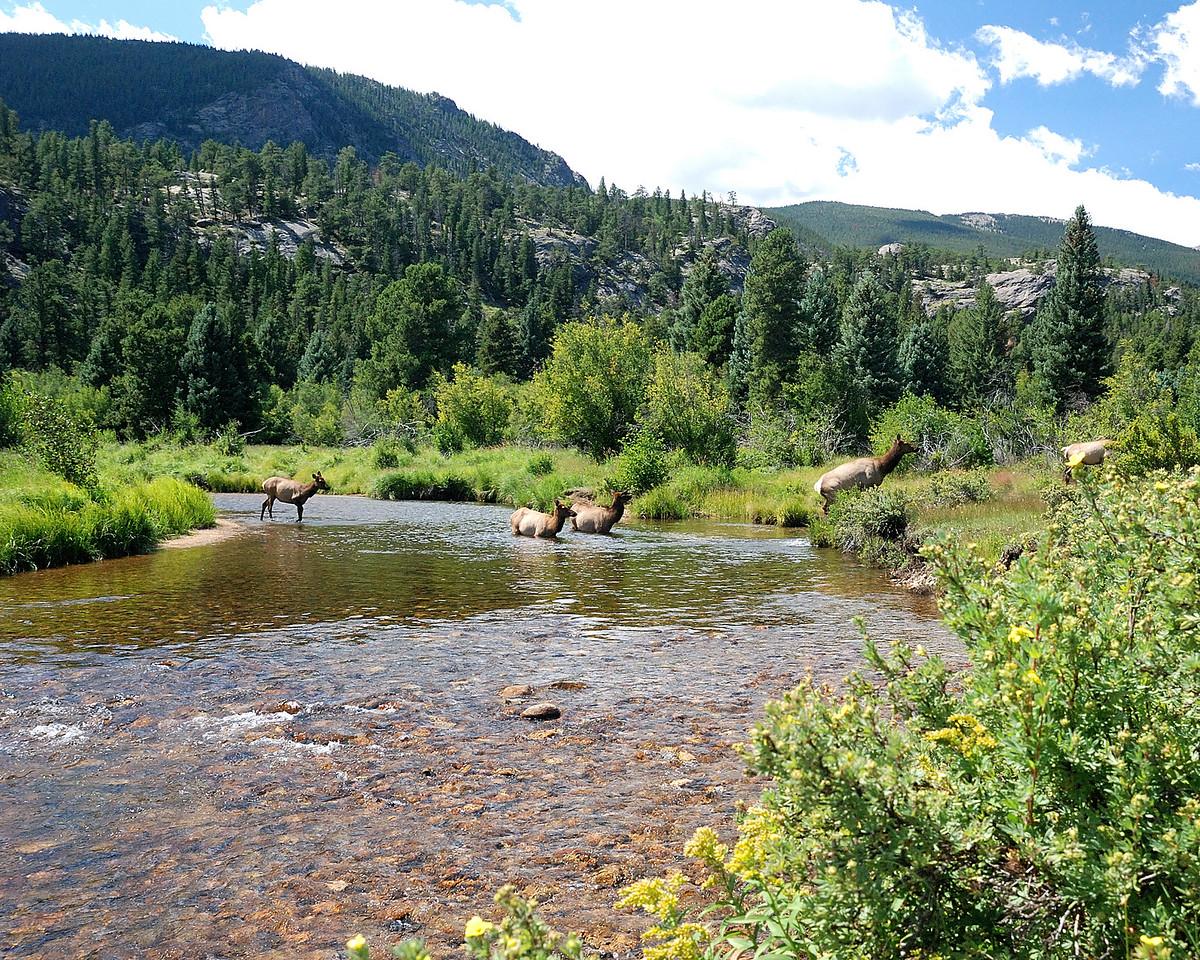 Elk crossing Stream4