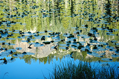 Lily Pads on Lake Reflection