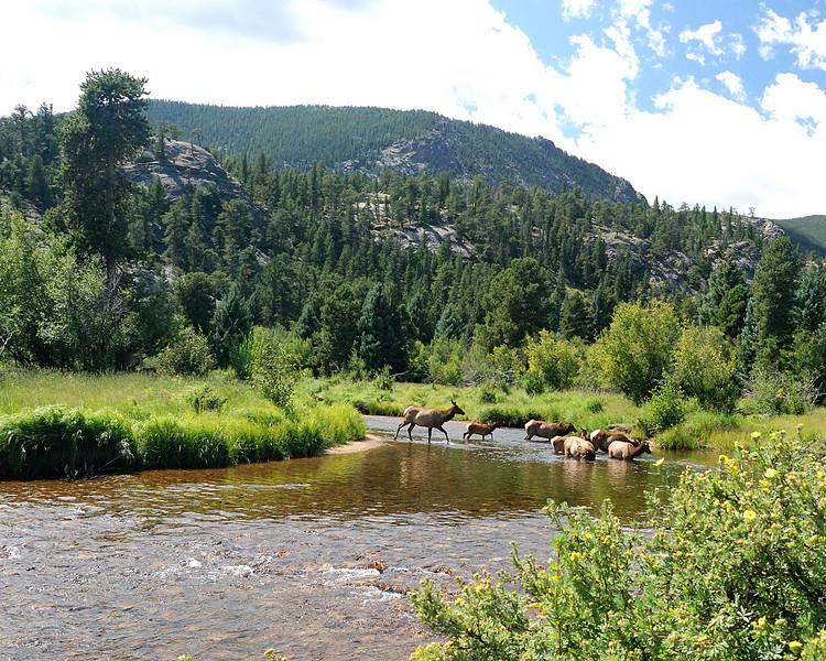 Elk crossing Stream3