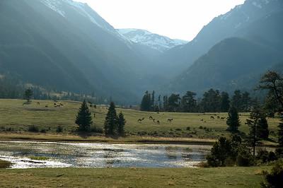 Elk in Sheeps Lake area
