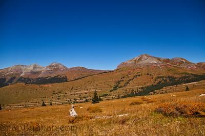 Alpine Prairie