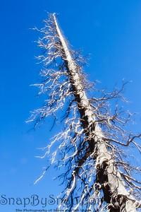 Loan Dead Tree