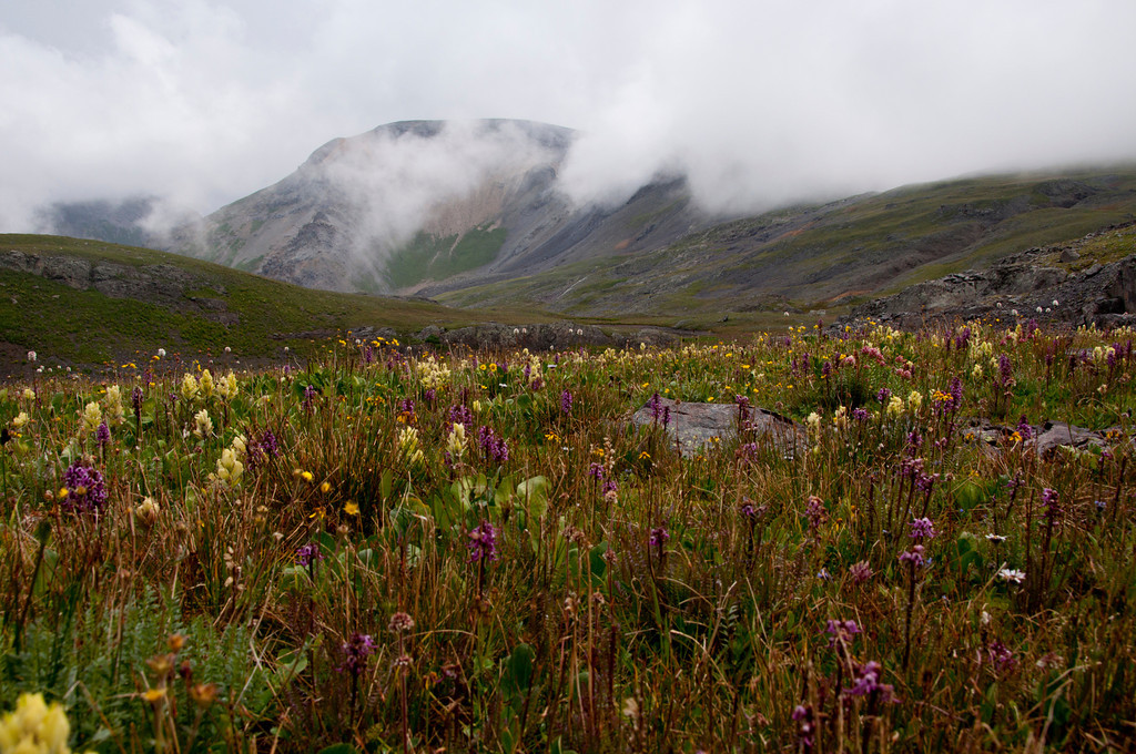 I have always wanted to see the flowers of the Yankee Boy Basin and here is a shot on a cloudy day. They were beautiful.