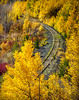 Aspens highlight this abandoned railway.