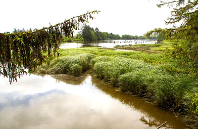 Lovely wetlands on the nearby Lewis and Clark River.
