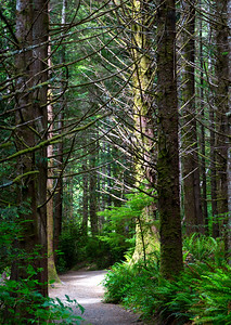I love the green-gray wet forests of western Oregon.