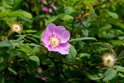 Unidentified wetlands flower