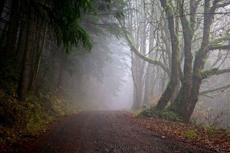A foggy road through the woods along the Columbia River Gorge.