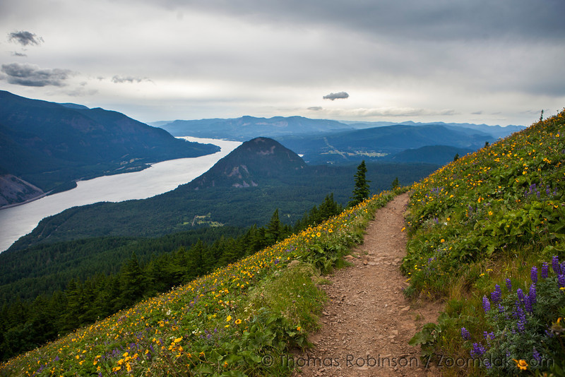 Mountain Trail Above the Columbia River Gorge