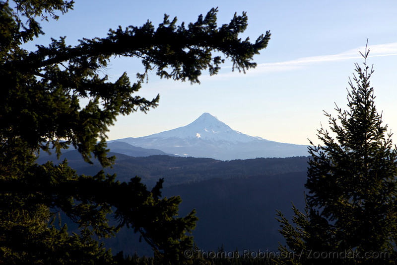 Mt. Hood View thru the Trees