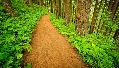 Pretty Hiking Trails