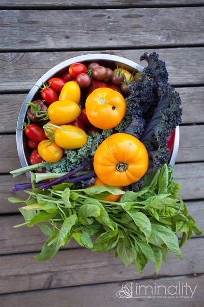 Wisconsin || Common Harvest Farm
