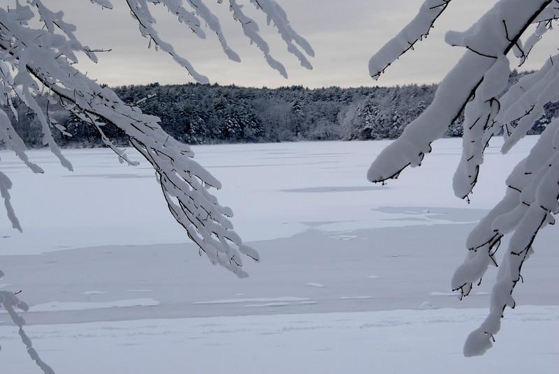 Cold Days, Walden Pond