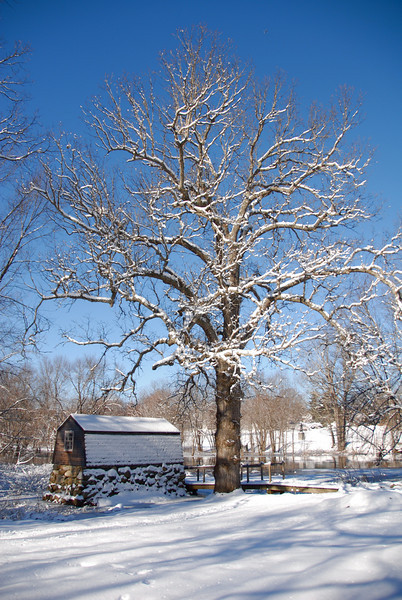 Blue Skies In Winter