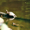 Turtles - CT Audubon Center - Fairfield, CT  9-8-99