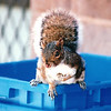 Sweet Little Squirrel - Yale University - New Haven, CT  10-23-98<br /> He has a degree in Natural Forestry