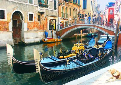 Blue Gondolas  & DOG cori likes