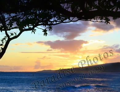 Tree Leaves sillouette  M Isle 0802 1109c ed