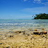 """Coconuts drift ashore. Cook Islands. Please preview book """"Cook Islands"""", above.  <a href=""""http://www.blurb.com/b/1907535-cook-islands"""">http://www.blurb.com/b/1907535-cook-islands</a>"""