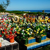 "Rarotonga cemetery, bestowed with flowers following the All Souls Day tributes. Cook Islands. Please preview book ""Cook Islands"", above.  <a href=""http://www.blurb.com/b/1907535-cook-islands"">http://www.blurb.com/b/1907535-cook-islands</a>"