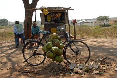 The local scene at Madikeri / Coorg, Karnataka. India. Coconut seller sitting at a road-side shop.