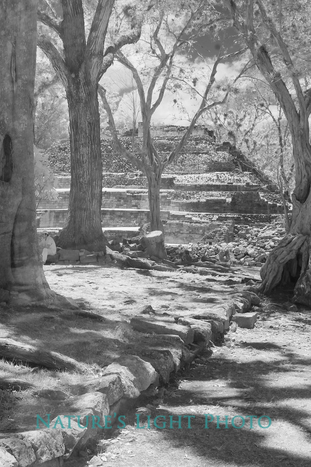 Copan Archeological Park, Honduras-6299