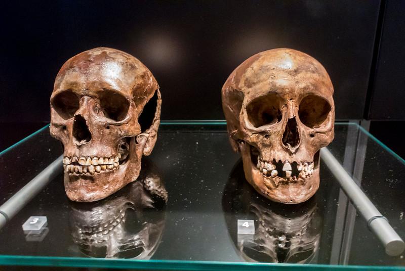 Copenhagen, Denmark, inside, the National Museum Nationalmuseet Ancient Human Skulls, North Zealand, 3500 years