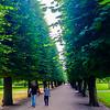 Copenhagen, Denmark, Public Park Scene with Road and LIne of Trees, King's Garden, Kongens Have,