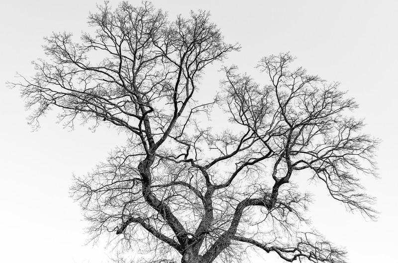Tree near Rosenborg Slot, Copenhagen