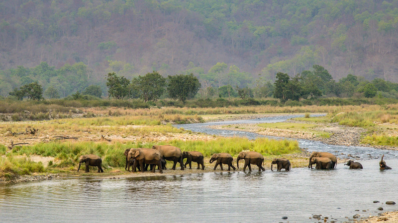 Two-toned. Having just crossed the river, all of the elephants seem to be wearing a two toned vest