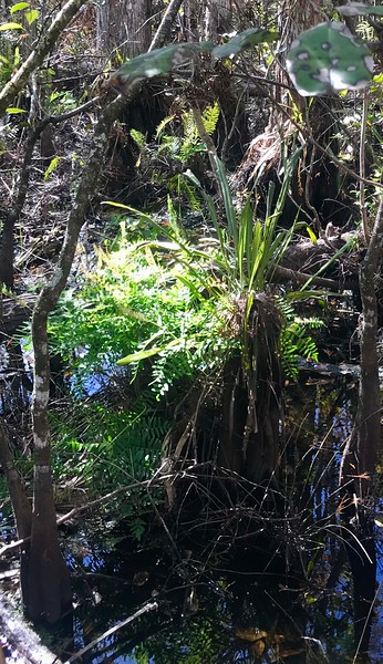 Corckscrewswamp