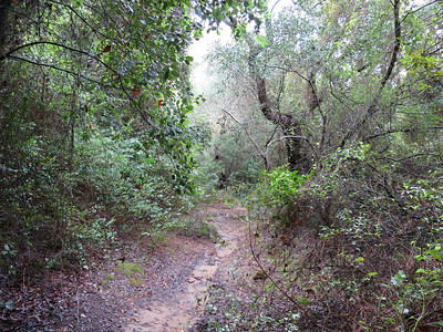 Wandelen in de bossen rond Kavos