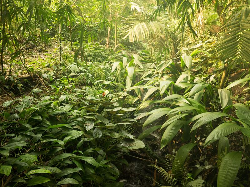 Rainforest Biodome