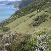 Kanuka and Manuka cover the hillsides.