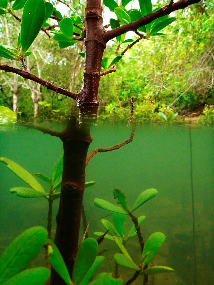kingfisher-park_20605