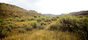 Sage brush field