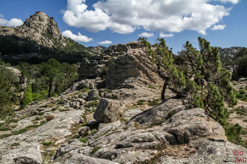 Best things to do in South Corsica - Opsedale forest