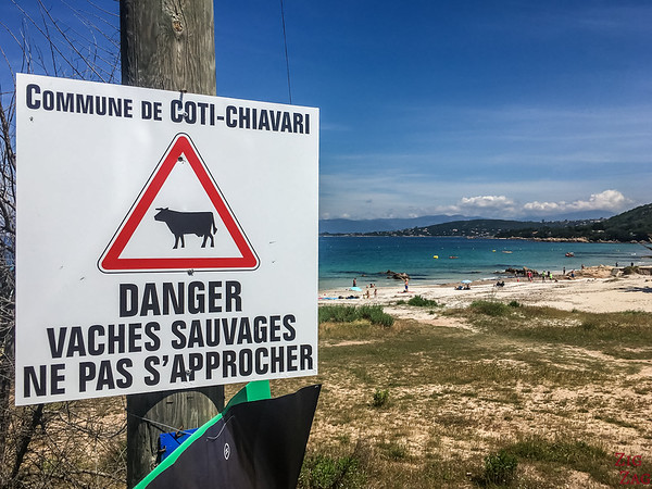 cow on beach sign