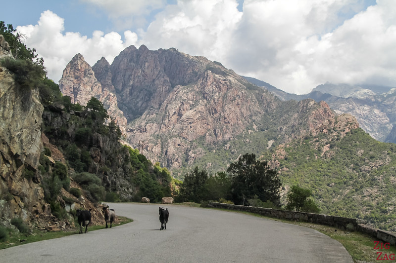 What to do in Corsica - road Trip