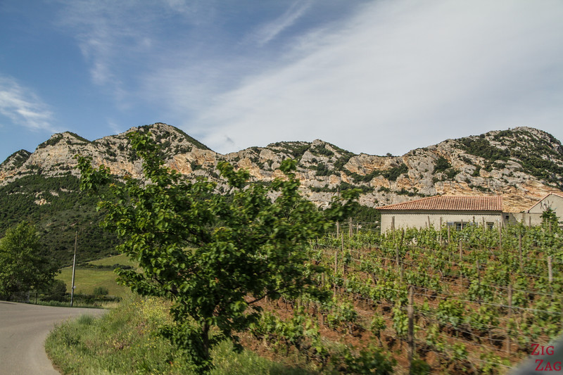 Patromonio vineyards 2