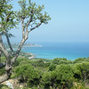 The Wild Maquis of Corsica