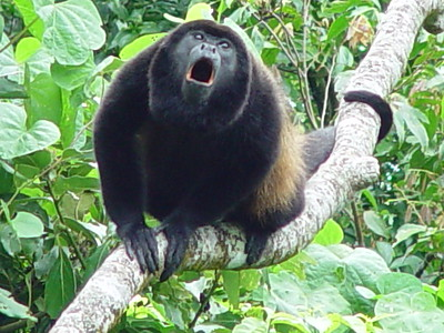 Costa Rica - 2002