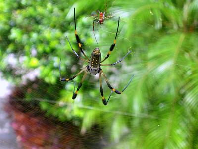 Costa Rica, 2004