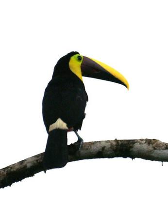 Costa Rica 2006
