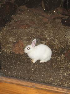 Luna, the Costa Rican bunny