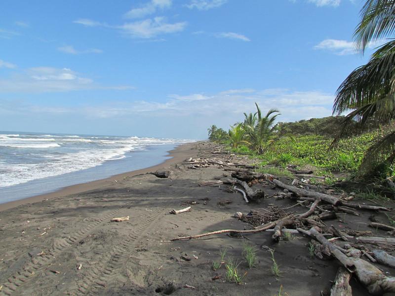 Beach at Tortuguero